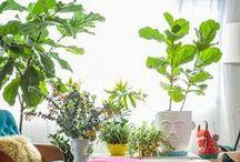Spaces / Plants / by Chris Johanesen