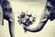 神的创造 / animals / by Lizette Fornoni