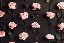 roseバラ
