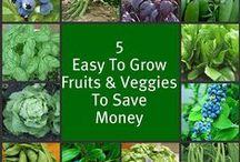Frugal Gardening / Tips, tricks and clever ideas on ways to grow your own vegetables, fruits and more without breaking the bank.