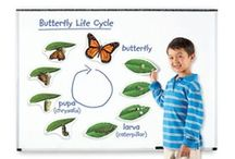 Life Cycles / The different stages of life for animals, humans, and insects.