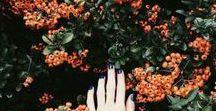 ❝ Orange ❞