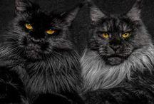 Cats★彡
