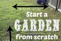 Gardening tips and ideas / Here you'll find all kinds of garden tips and ideas to make your yard stand out and your garden thrive!