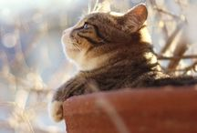 CATS! / Cats! Cats! Cats! / by Amy Elizabeth