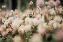 Shades of: Pink & Grey / Everything #pink and #grey. / by Amy Elizabeth