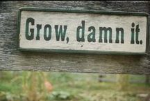 How does your garden grow? / by Kristina Yager-Elkins