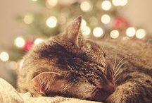 Christmas time ♥