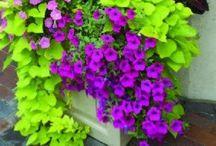 Garden & Gardening / Love the Garden   / by Deda White