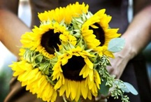<3 Sunflowers! / by Kate Lowe