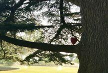 Le coeur & le jardin Vauréen / Le plein air de lavaur