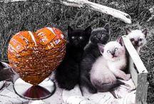 Le coeur & les chatons / La rencontre du coeur et les chatons.