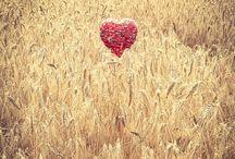 Le coeur & la nature / Le coeur se promène dans la nature
