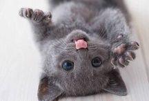 ❥❥ C U T E  ❥❥ / Cute all sorts of animals