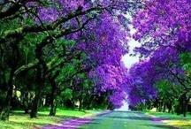 "Trees ""Walking in a Dream"" / by Luisa Lizano"