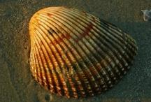 Shells / by Luisa Lizano