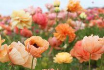 ❥❥ P E A C H Y ❥❥ / Color peach, peachy, pink