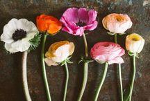 ❥❥ FLoWErS & BLoEmPJeS ❥❥ / Beautiful flower (pieces) / mooie bloem(stukken)