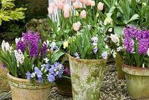 Jarní truhlíky a osázené nádoby / Inspirace jak osázet truhlíky či venkovní nádoby na jaře, aby nám květiny nezničil případný mráz?