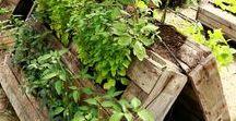 pallet garden / Využití palet v zahradě