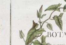 """Botanical drawing / """"Ti dico che voglio avere la voce dell'albero che piantasti dentro di me. Ti dico che sono la frutta e il succo della frutta che lascia il pizzicore sotto la lingua.""""Cristina Rivera Garza"""