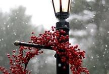 Wreaths and ... / ... un vero abete, un pino di montagna, con un po' di vento vero impigliato tra i rami, che mandi profumo di resina in tutte le camere,  e sui rami i magici frutti: regali per tutti.   Poi con la mia bacchetta me ne andrei a fare magie per tutte le vie.  -Gianni Rodari-