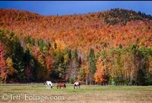 fall foliage articles for New England / These are my autumn articles linked through my pictures here. If you haven't been to my website (jeff-foliage.com) then these will introduce you to New England fall foliage. If seeing the fall colors of New England are a bucket list item then be sure to stop in and read up on my fall foliage forecast and suggestions on where to find the best colors of the rainbow that we call an autumn in New England!
