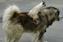 Cats Vs. Dogs / An Epic Furry Battle!