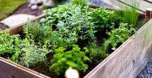 Kjøkkenhage / Kitchen garden / Pallekarmer, urter, planter, hageplanlegging, ting jeg vil gjøre, ting jeg burde gjort. Hage! <3