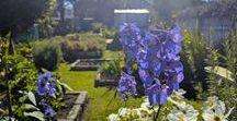 Our award winning garden / Showcasing our award winning community garden