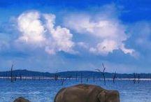 Sri Lanka Travel Inspiration / sri lanka, temples, safaris, animals, adventures, mountains, beaches  Food recipes, restaurants, food tours and restaurants, places to eat, markets, food ideas, travel, travel blog, travel blogger, travel guide, travel routes, itineraries, travel life, wanderlust, wonderlust, travel ideas, travel inspiration, travel bucket list,travel tips, solo travel, female travel, travel hack, travel adventures, places to see, beaches, thestylishtrotter.