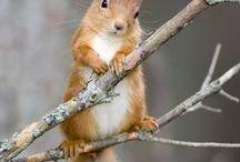 zwierzęta ♥ / Zwierzęta te słodkie i nie słodkie /animals - cute and not cute.