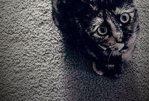 Animals / by Lauren Ayers