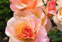 Garden and Flowers / by Sue Ashtigo Pittard