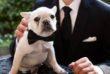 Furry Friends / A couple's dog is always an important member of the family, and we love when they are included in the wedding day!