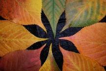 Seasons- Autumn Delights / by Marie Nordgren