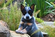 ----Puppies----