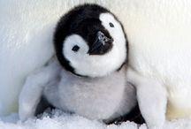 Travel in — Antarctica
