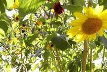 How Does Your Garden Grow? / Gardening and herbalism of the witchy nature.