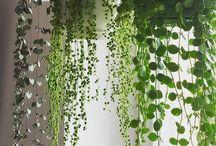 Houses plants