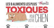 laguages ou gestes qui sauvent les chiens / les gestes qui sauvent et le language des chiens