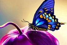 Flutter~Bys  / ~The butterfly is a self~propelled flower~ / by Julie Copeland