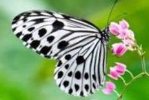 Butterflies / by Bernadine Tembreull
