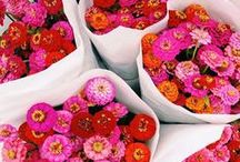 Floral Delights / by Amanda D.