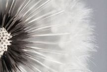 Inspirational fauna & flora / Endless source of inspiration for Mu Design #biomimicry #patterns #fractals