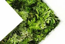 Green design / When plants and design unite #green #plants #greenwall #inspiration
