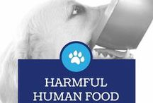 Harmful Human food for your Dog