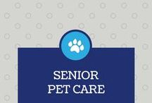 Ageing Dog Care