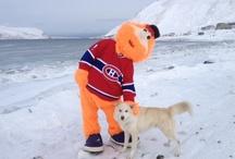 Youppi! au Nunavik / Youppi! in Nunavik / by Canadiens de Montréal