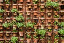 //vertical gardens